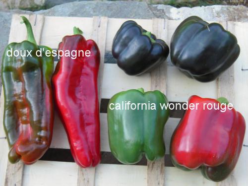 California wonder rouge