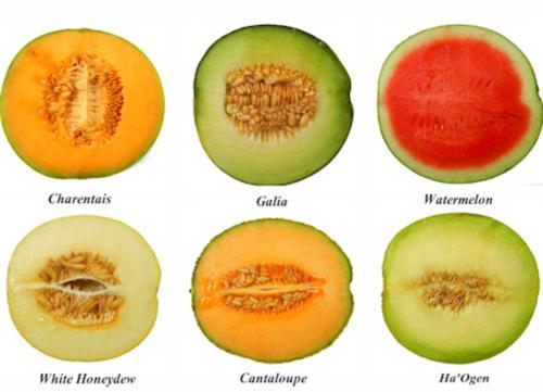 Melon ogen à chair verte