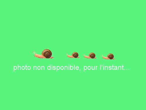 Cantaloup charentais