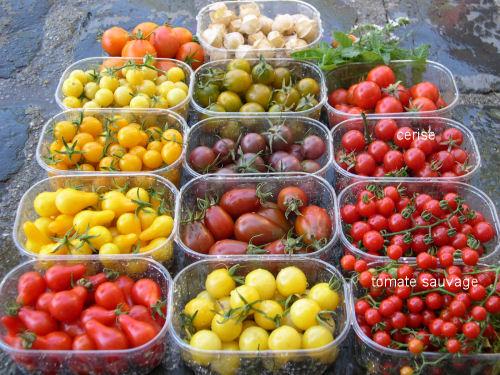 Tomate sauvage